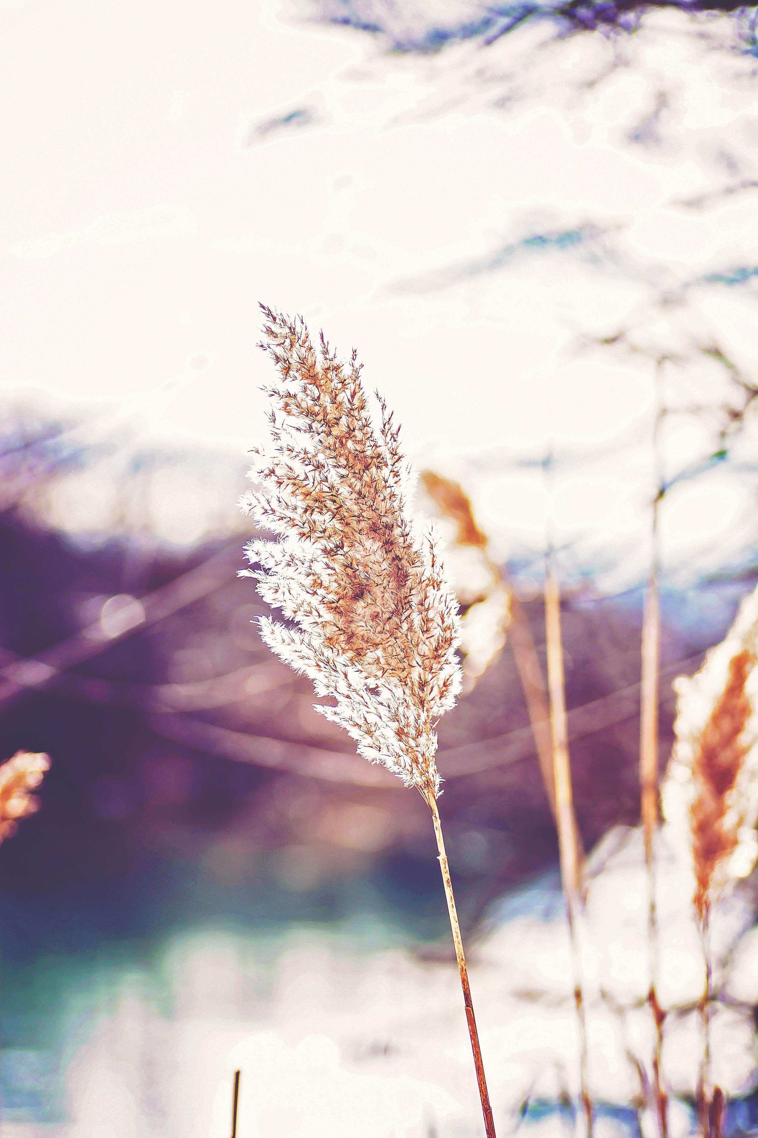 Nature 8.jpg