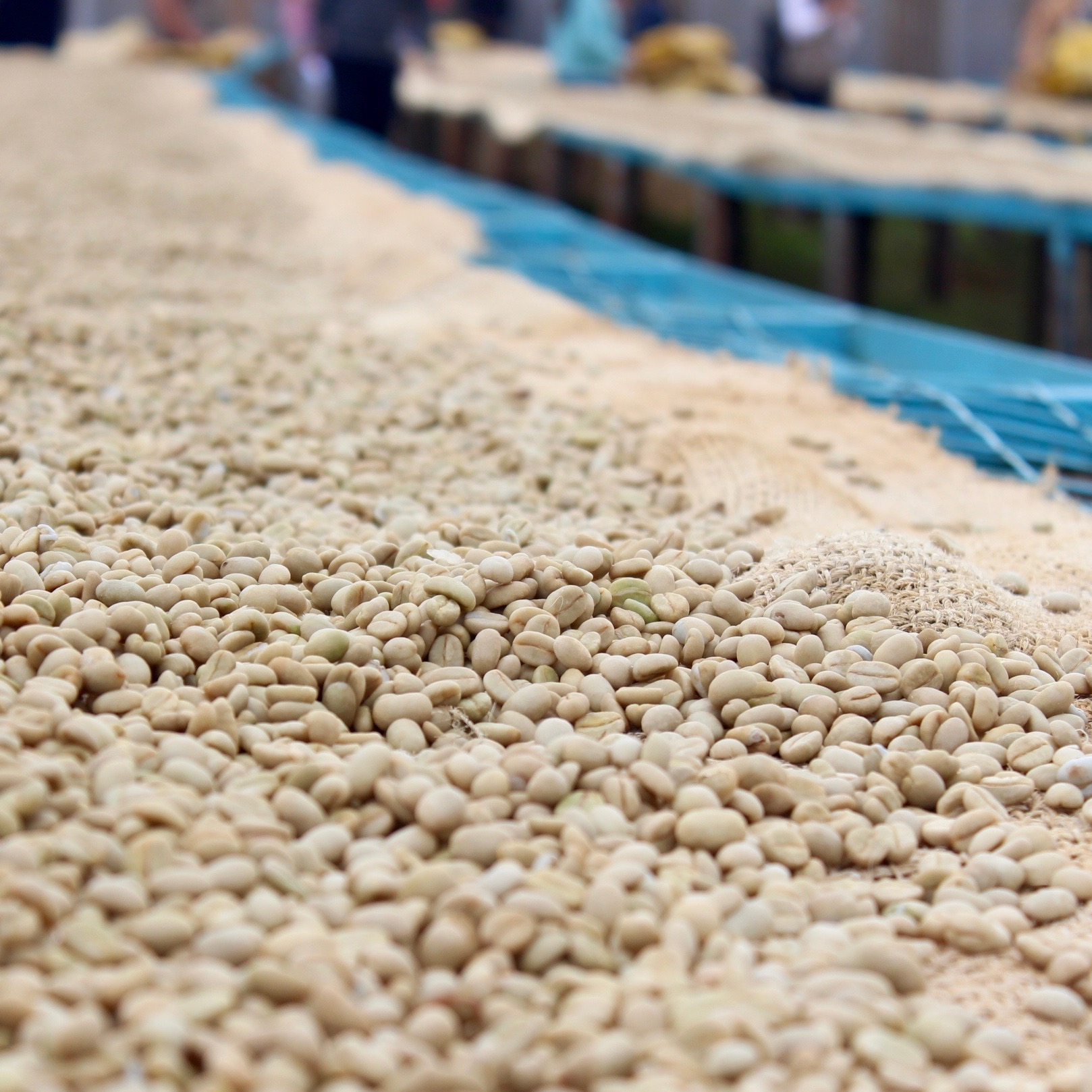 """The drop in 'C' prices below US$1.00 in August 2018 has drawn the attention of major media sources covering the topic and reaching a readership of coffee consumers worldwide."" -"