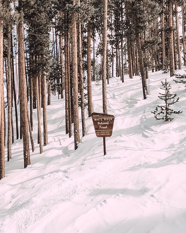 Aspen 🤠 fresh ski tracks OB out of bounds ⛷🎿
