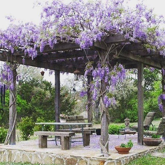 Where I grew up outside of Charleston, SC, Wisteria grew wild in the trees surrounding the entrance to our neighborhood. I was pleasantly surprised to learn it also does well in Minnesota - like really well! So I have aspirations for a pergola over our backyard patio like this one. These spring rains don't get me down, they get me thinking about all the things that will GROW. What's growing in your yard this spring?  #pergola #trellis #patioinspo #patiogoals #outdoorliving #garden #houseandgarden #womanarchitect #minneapolis #veranda #wisteria 🌿🌷💜📐