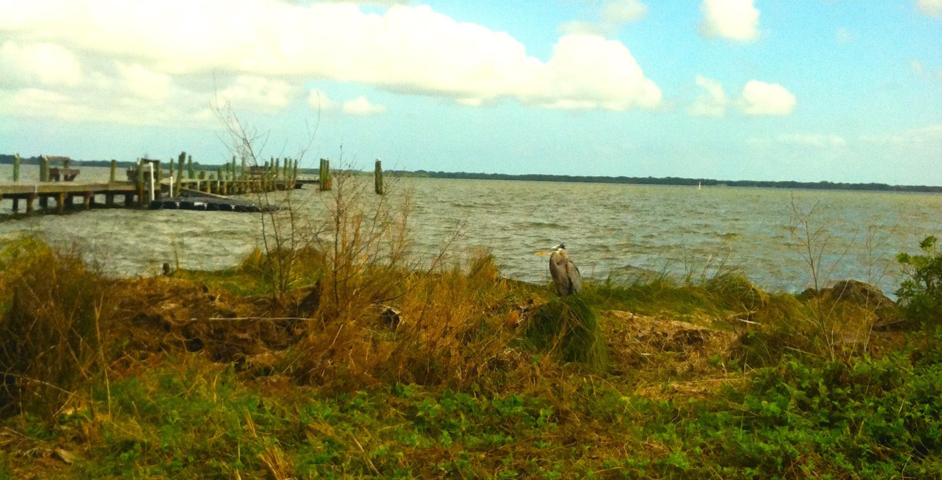 Dock&Heron-EDIT.jpg