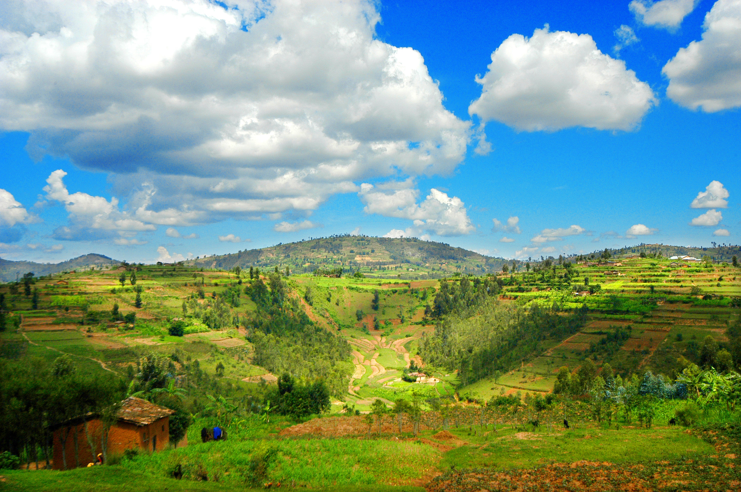 Photo: Rwandan landscape.Photographer:Alan Schaller, Union Hand-Roasted Coffee.