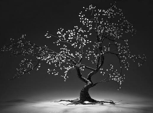 bonsai cherry tree  approx 60cm tall  photo credit: core photography, Galway Ireland
