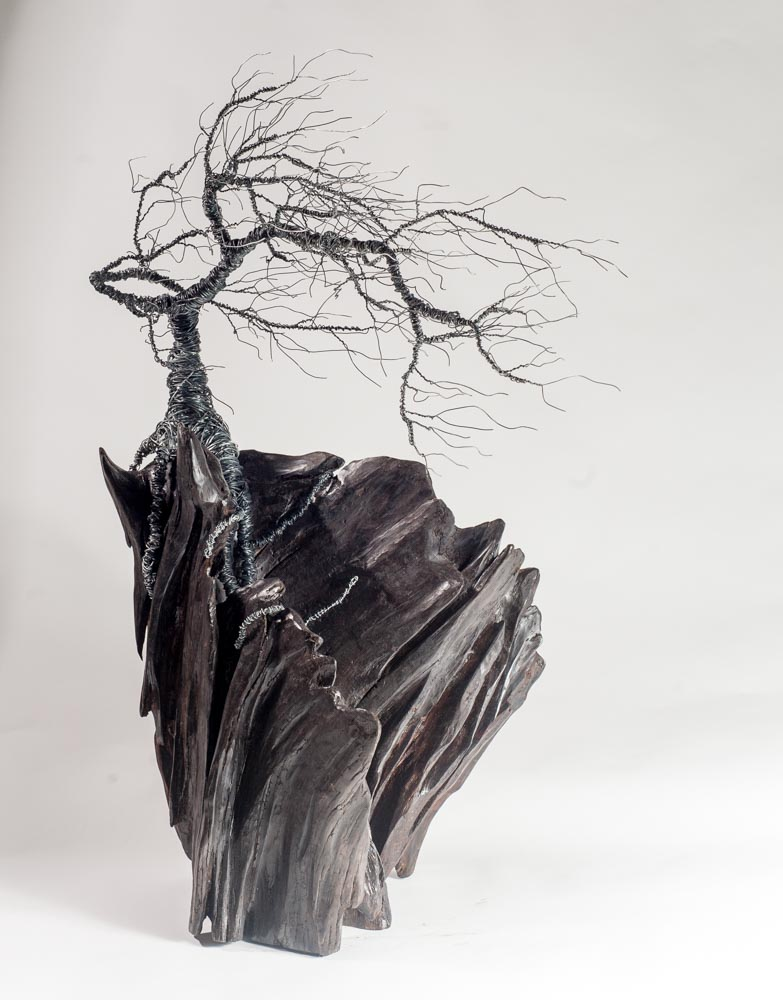 the bog tree  approx 90cm tall  photo creedit: Reg Gordon