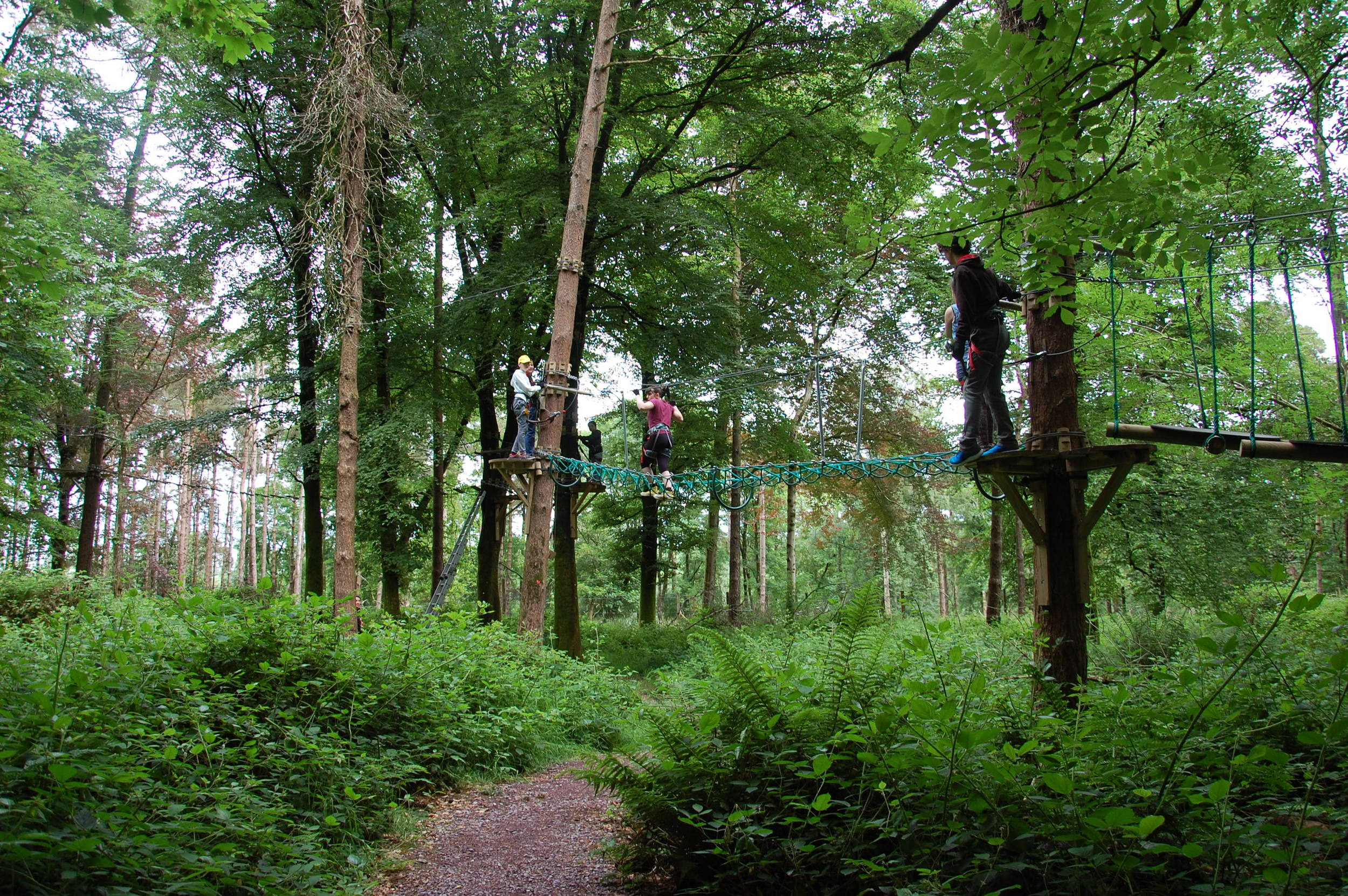 Student team-building day in Farran Woods