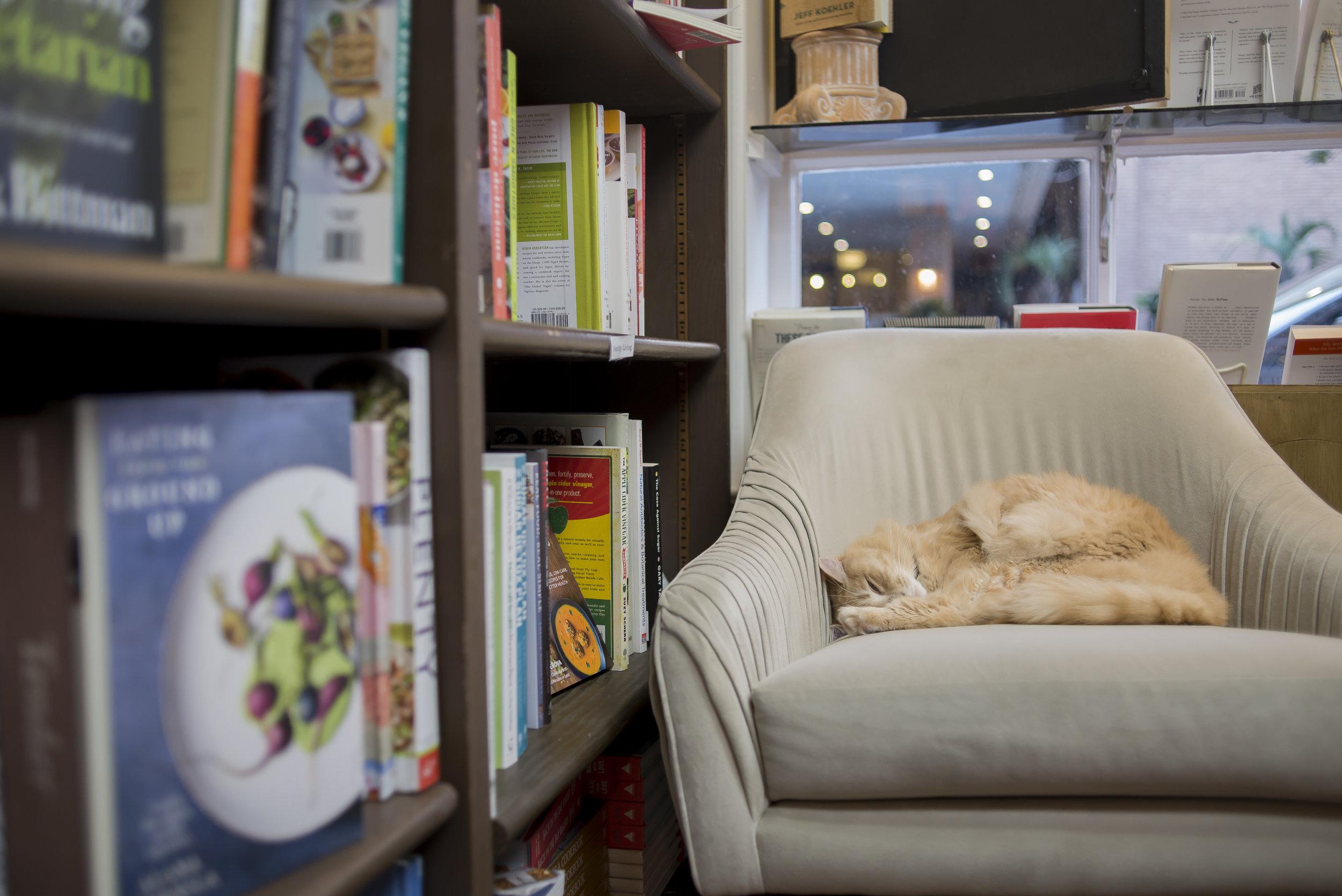 A cat napping at E. Shaver Bookseller, Savannah GA | Genteel & Bard