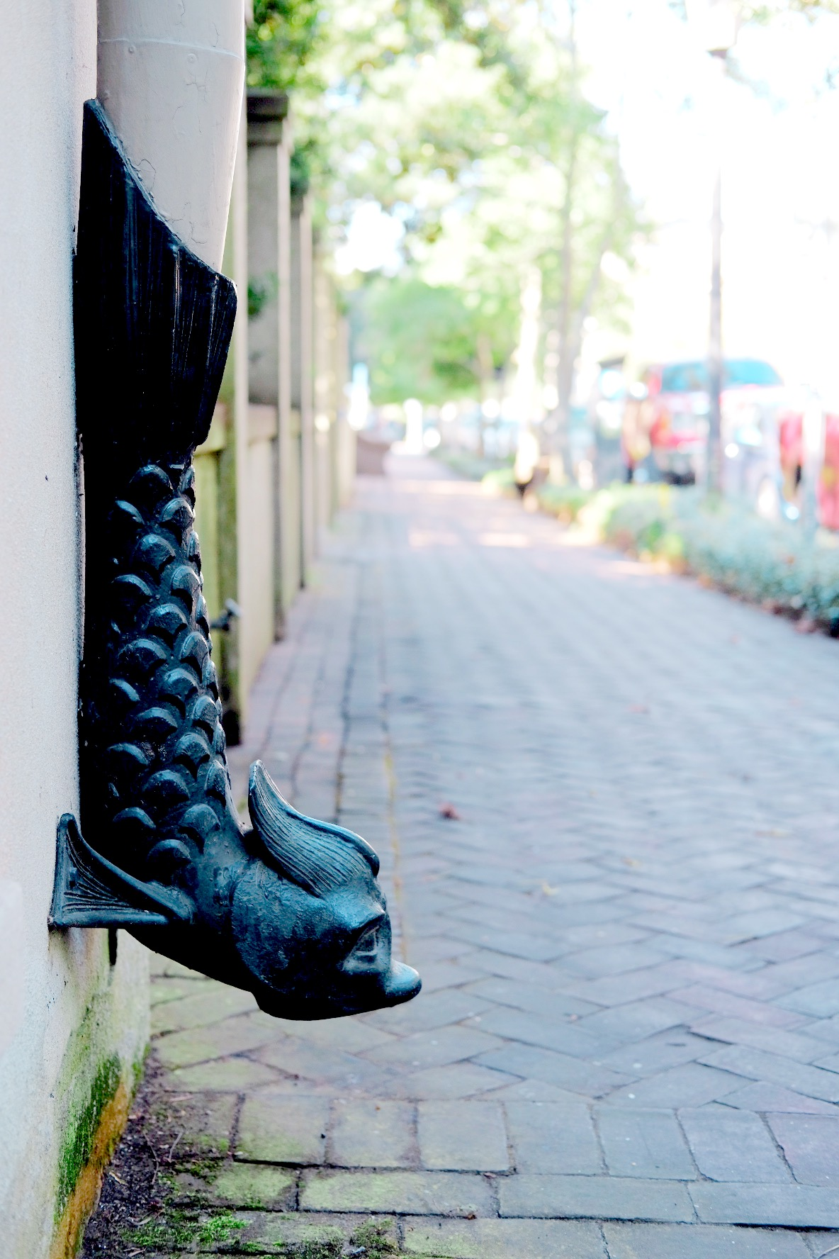 A dolphin fish spout on Bull Street