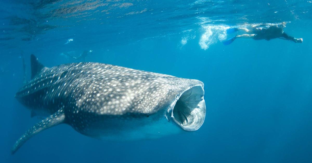 whale-shark-fb.jpg