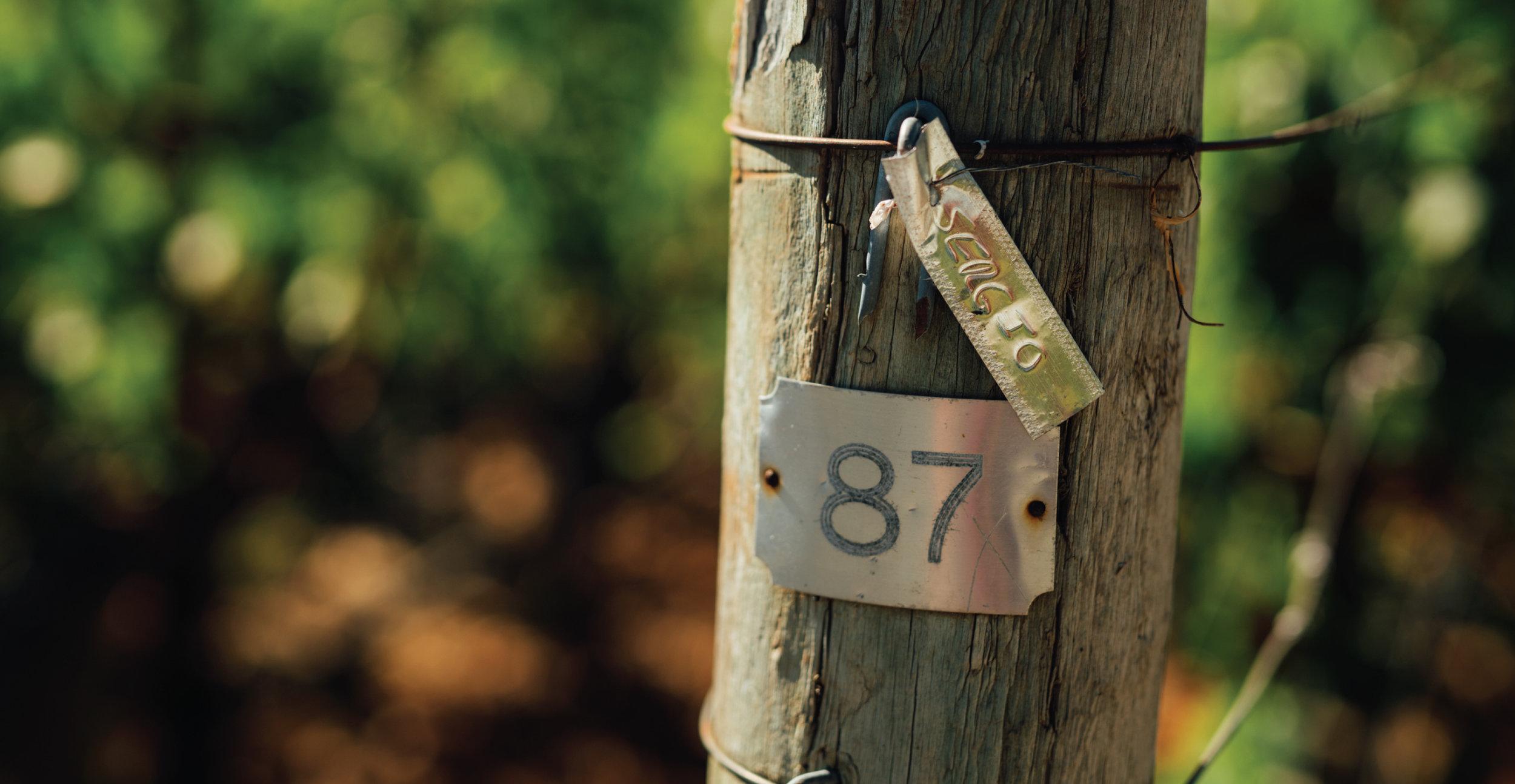 vineyards-01.jpg