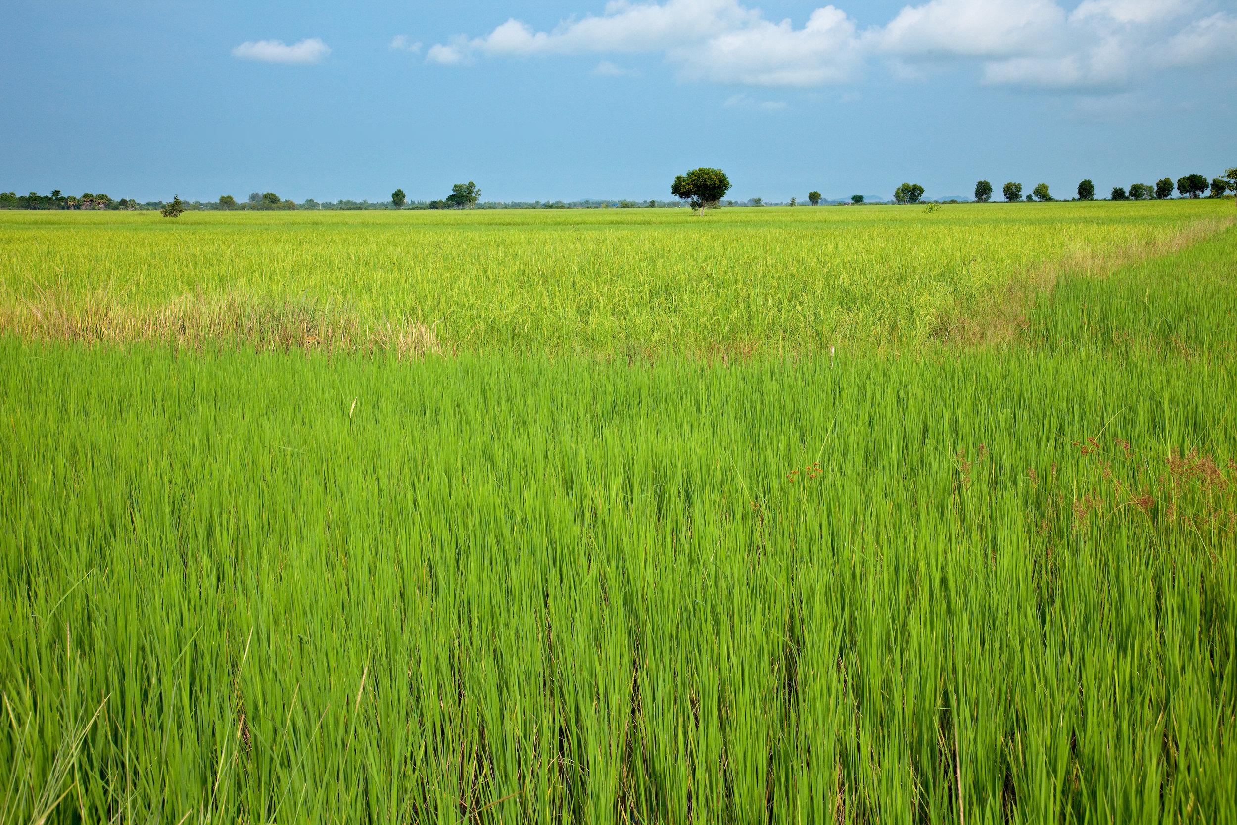 Cambodia-0041.jpg