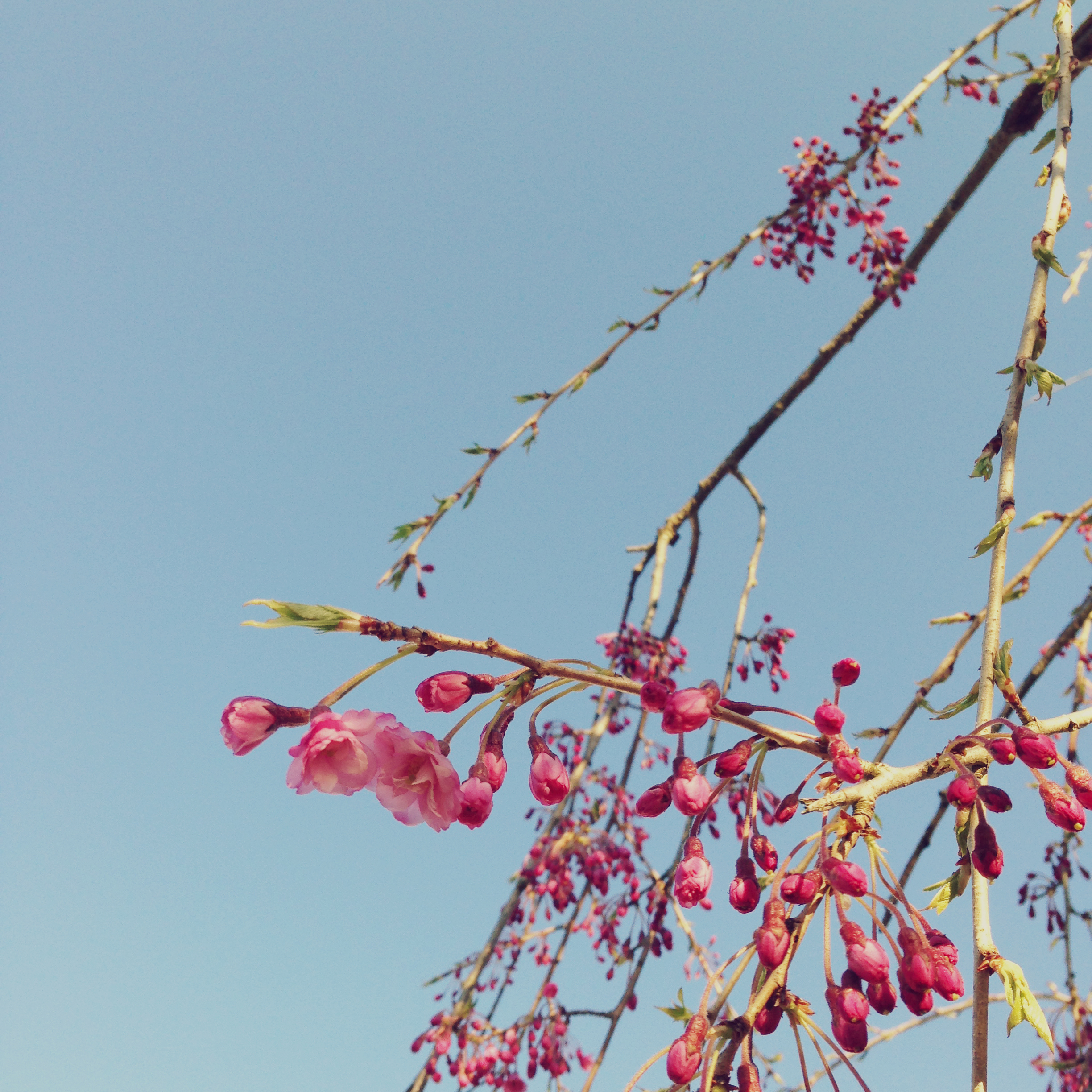 #CILoves Spring Blooms | Danielle