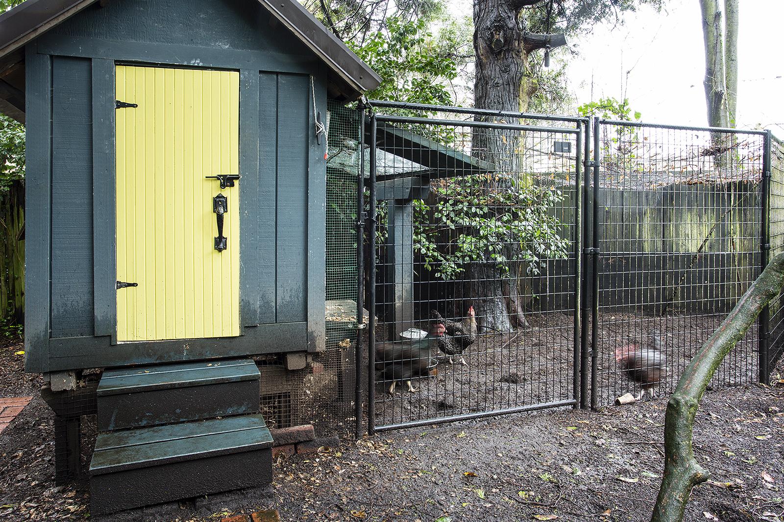 Chickens-med.jpg