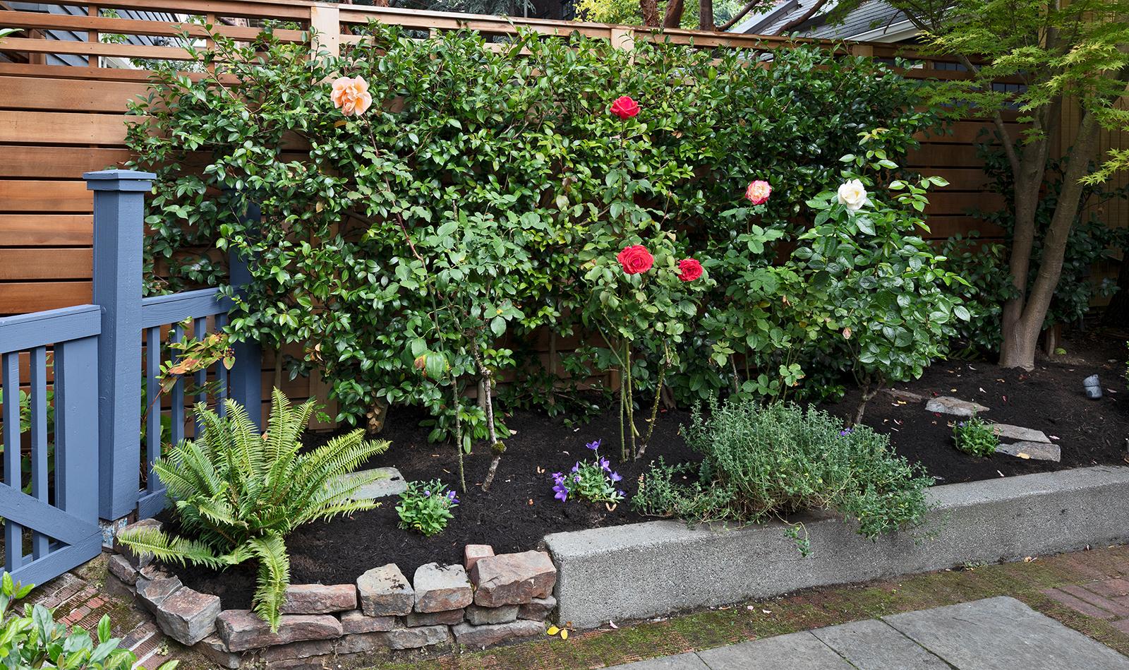 Rose-2-Med.jpg