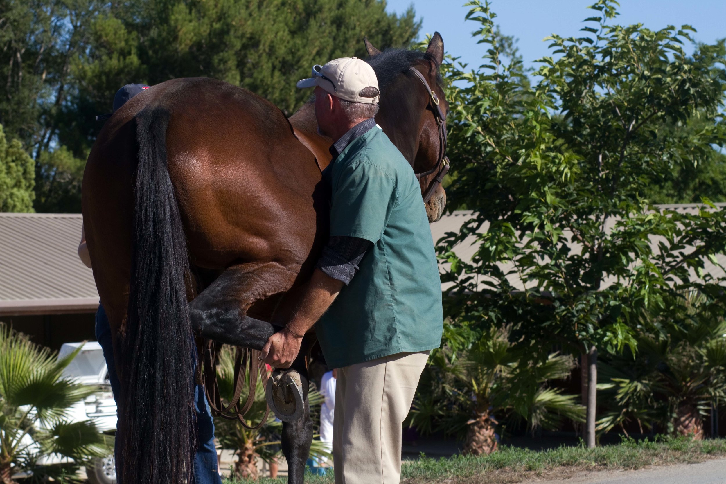 Dr. Jensen performing a lameness exam.  Photo by  Carrie Kitley