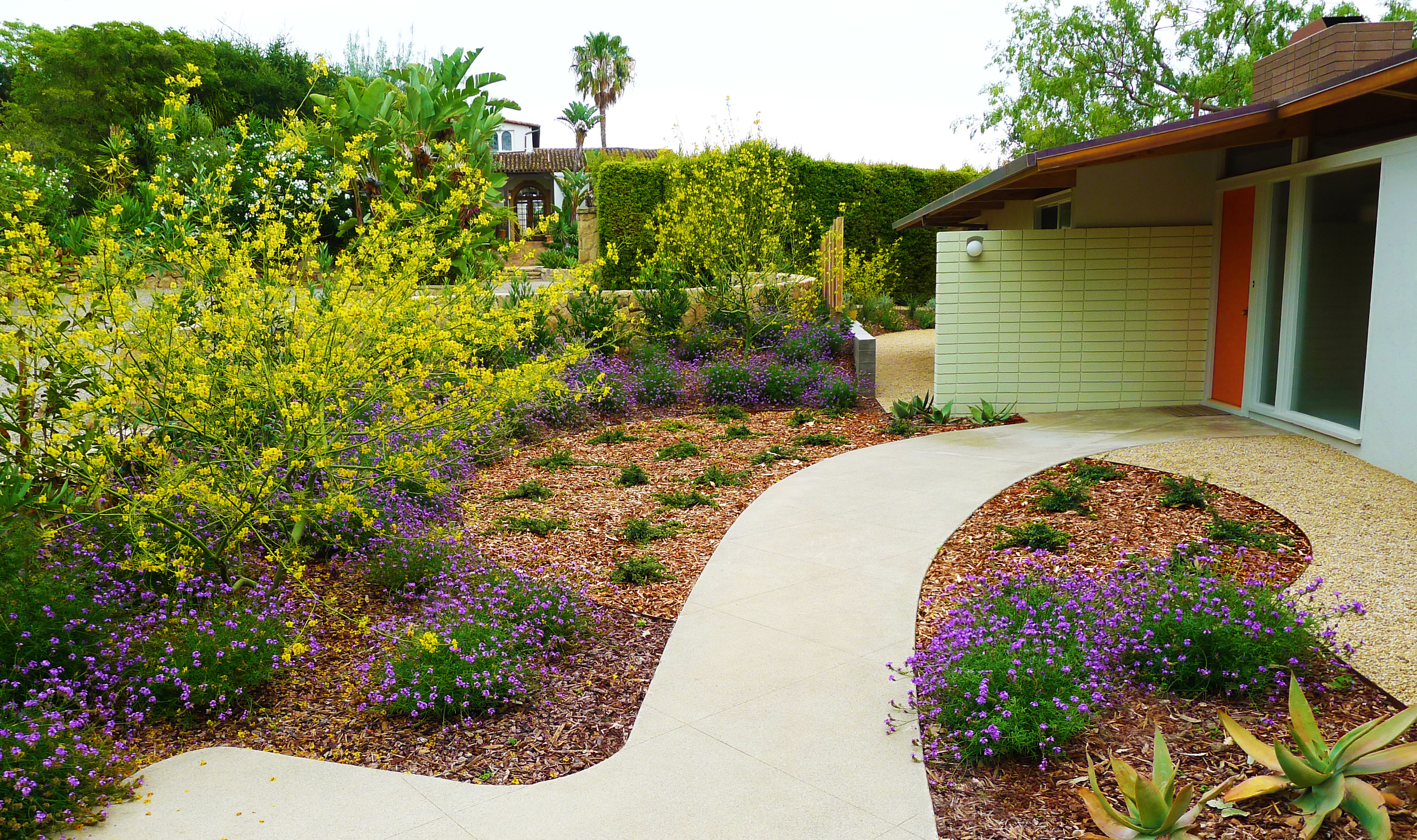 modern landscape with flowering shrubs