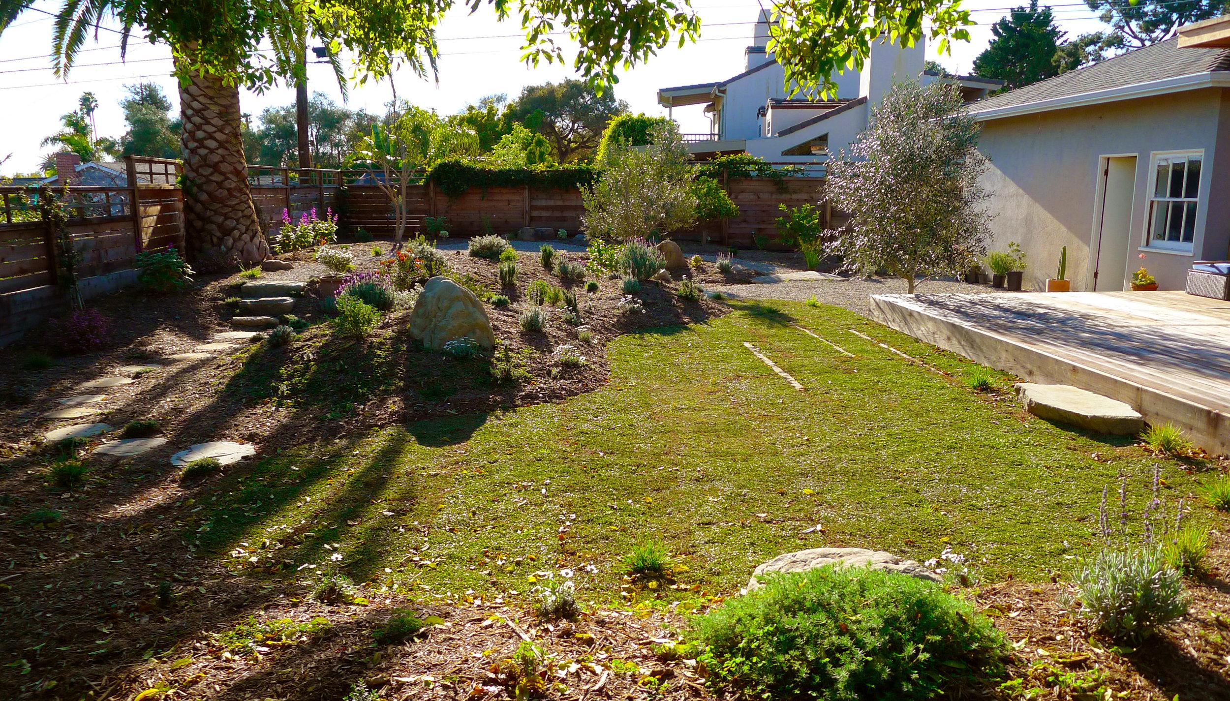 zen garden landscape with olive trees