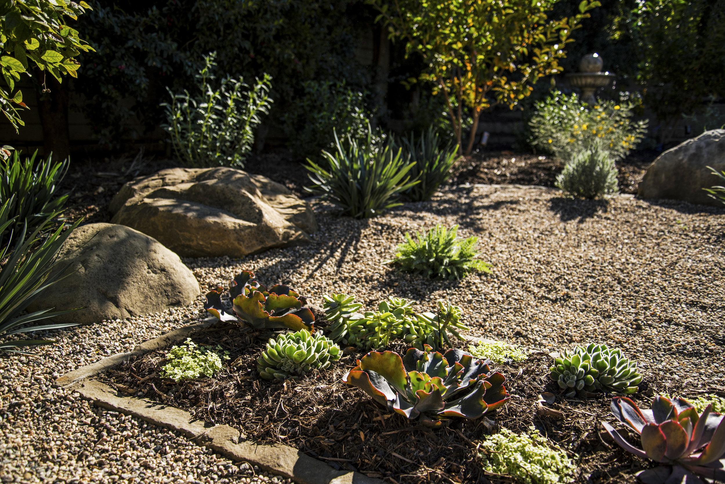drought tolerant landscape with succulents