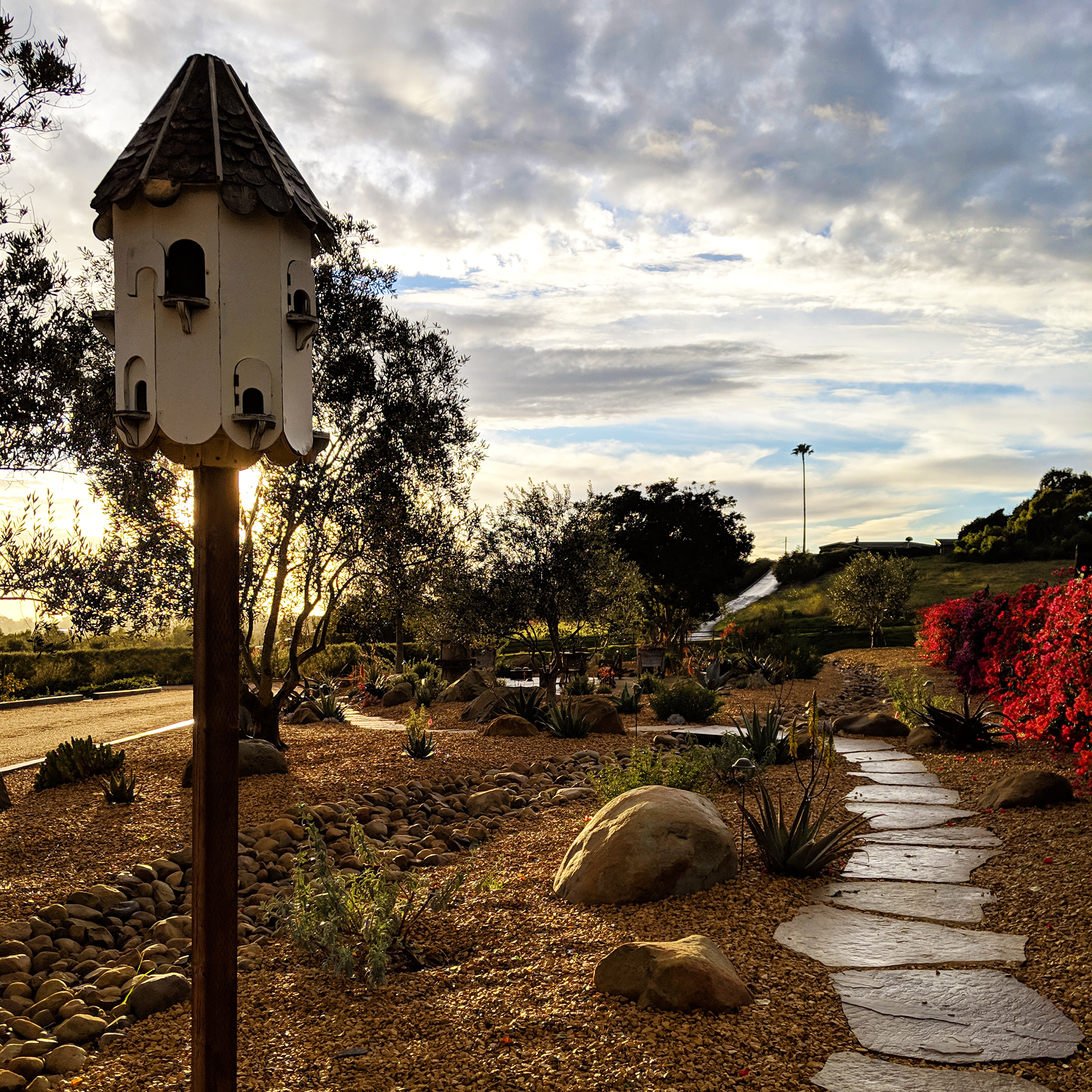 drought tolerant landscape with birdhouse and flagstone