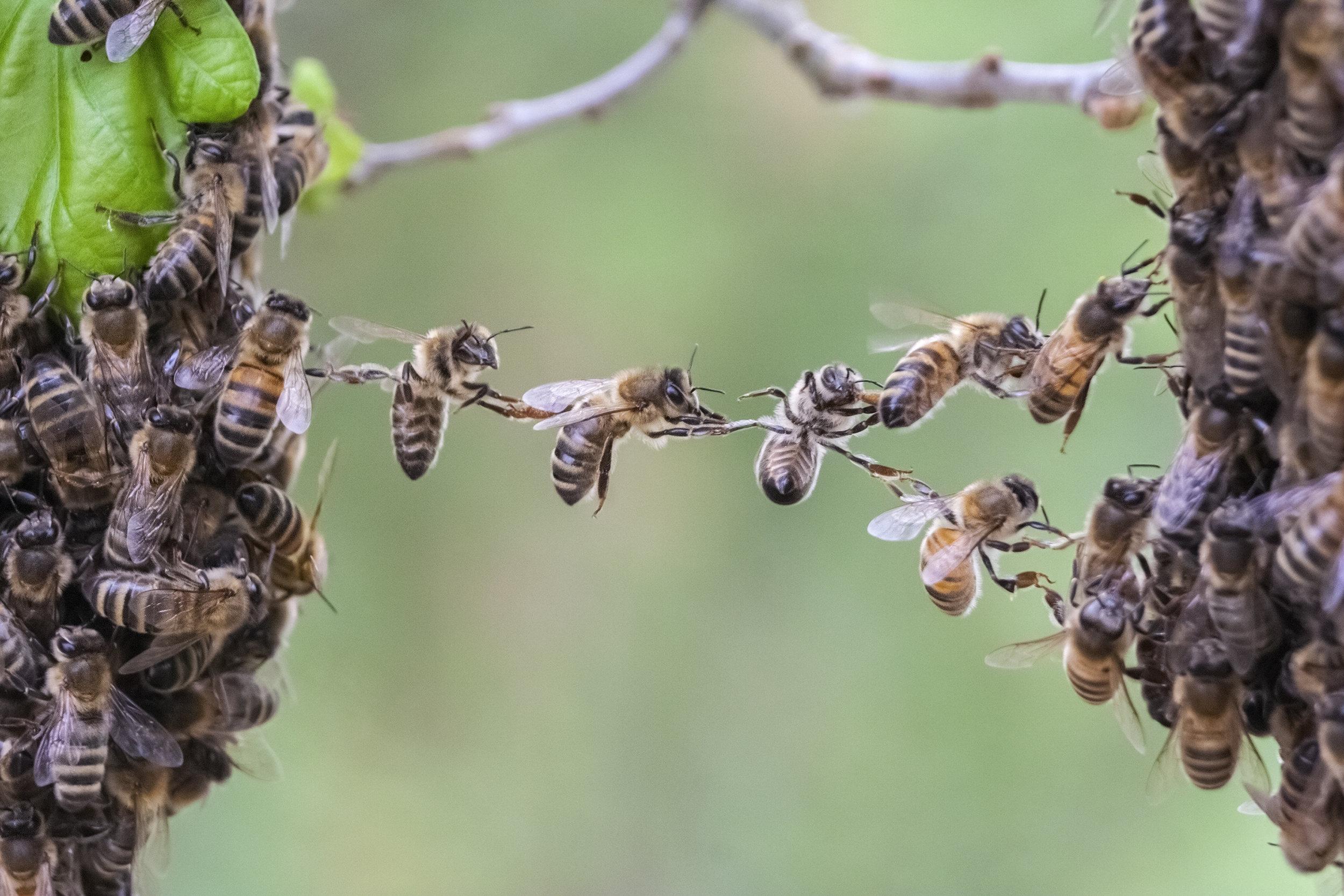 Bees.jpeg