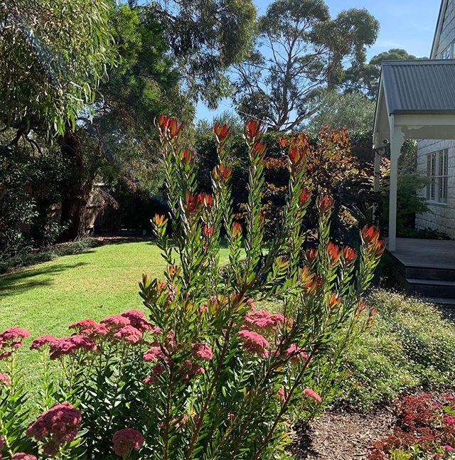 Autumn vibe ✨🍂#thegoodgardenco #flinders #landscape #design #autumn #plants #garden #morningtonpeninsula