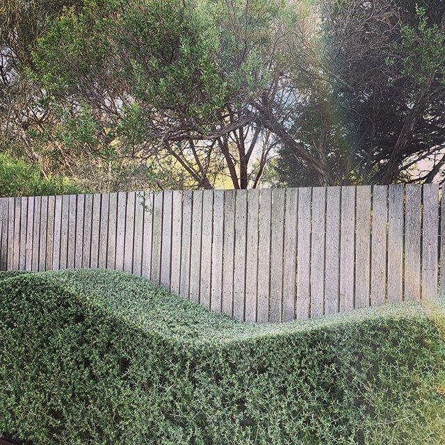 👋#thegoodgardenco #morningtonpeninsula #landscapedesign #westringia #blairgowrie #plantlyfe #garden