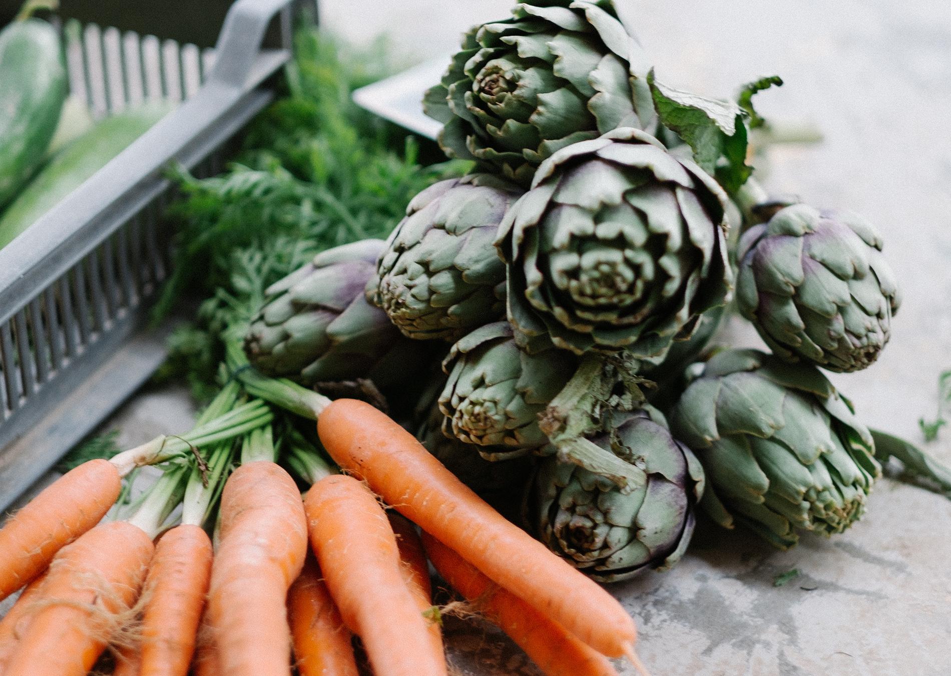 Nutrition & Wellness - Blog