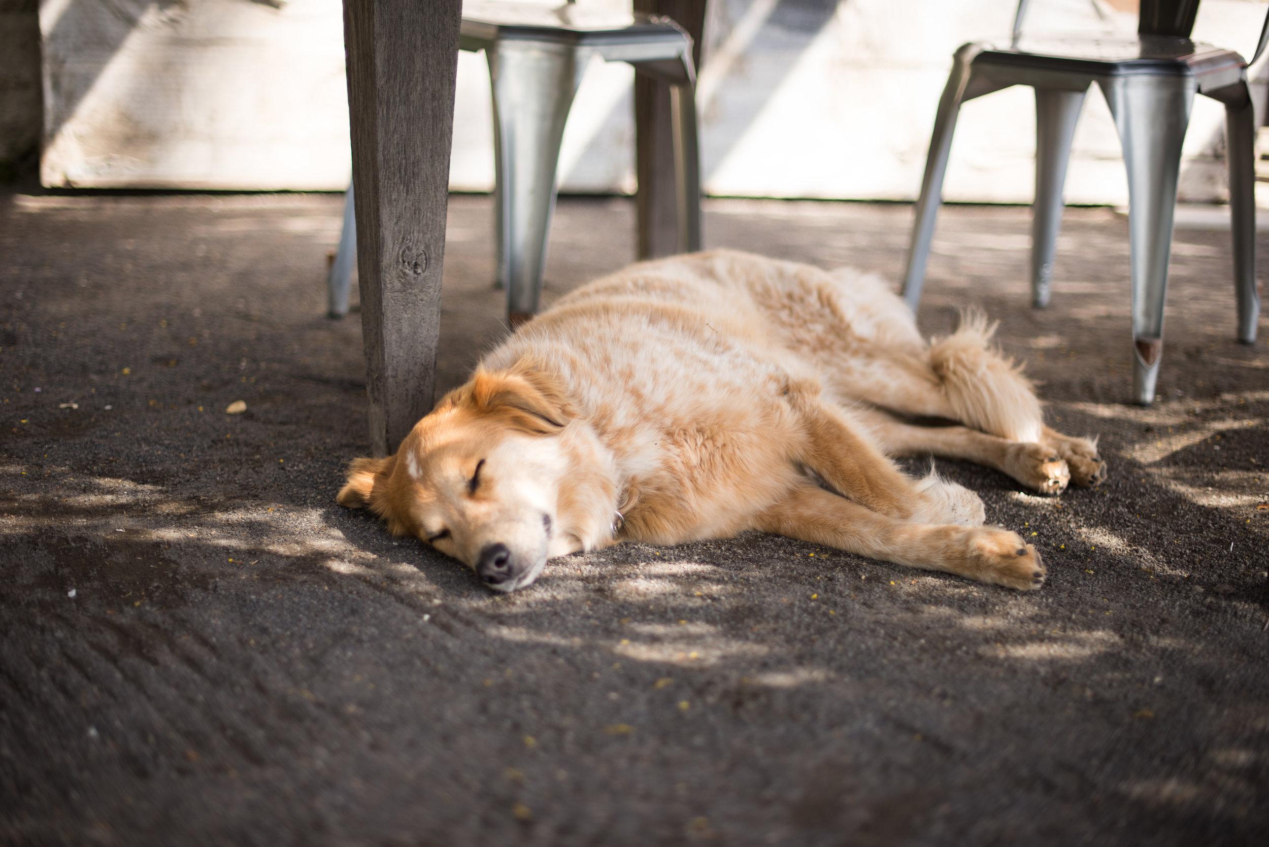 sleeping-in_13207976255_o.jpg
