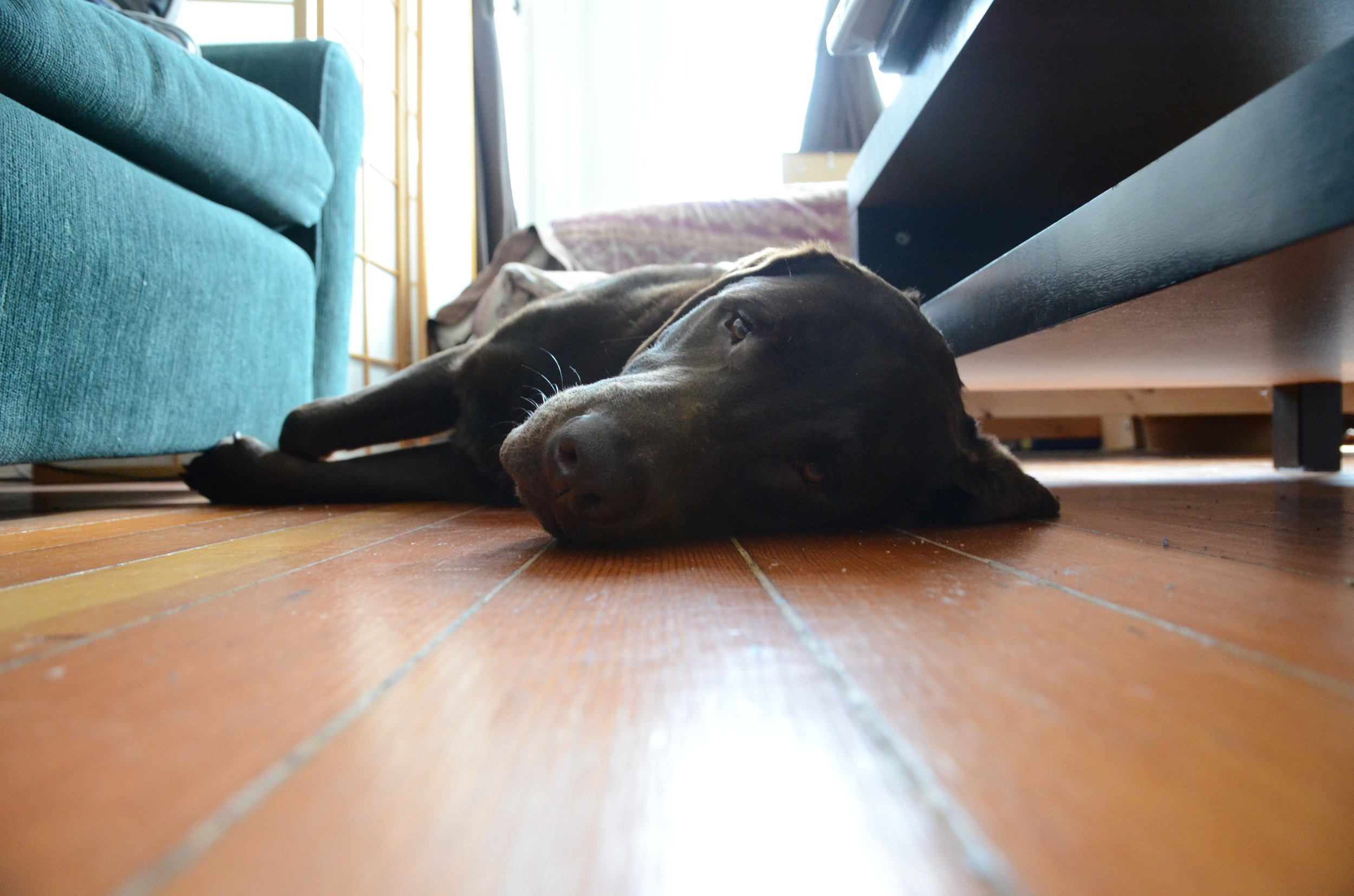mr-pups-is-tired_5732930432_o.jpg