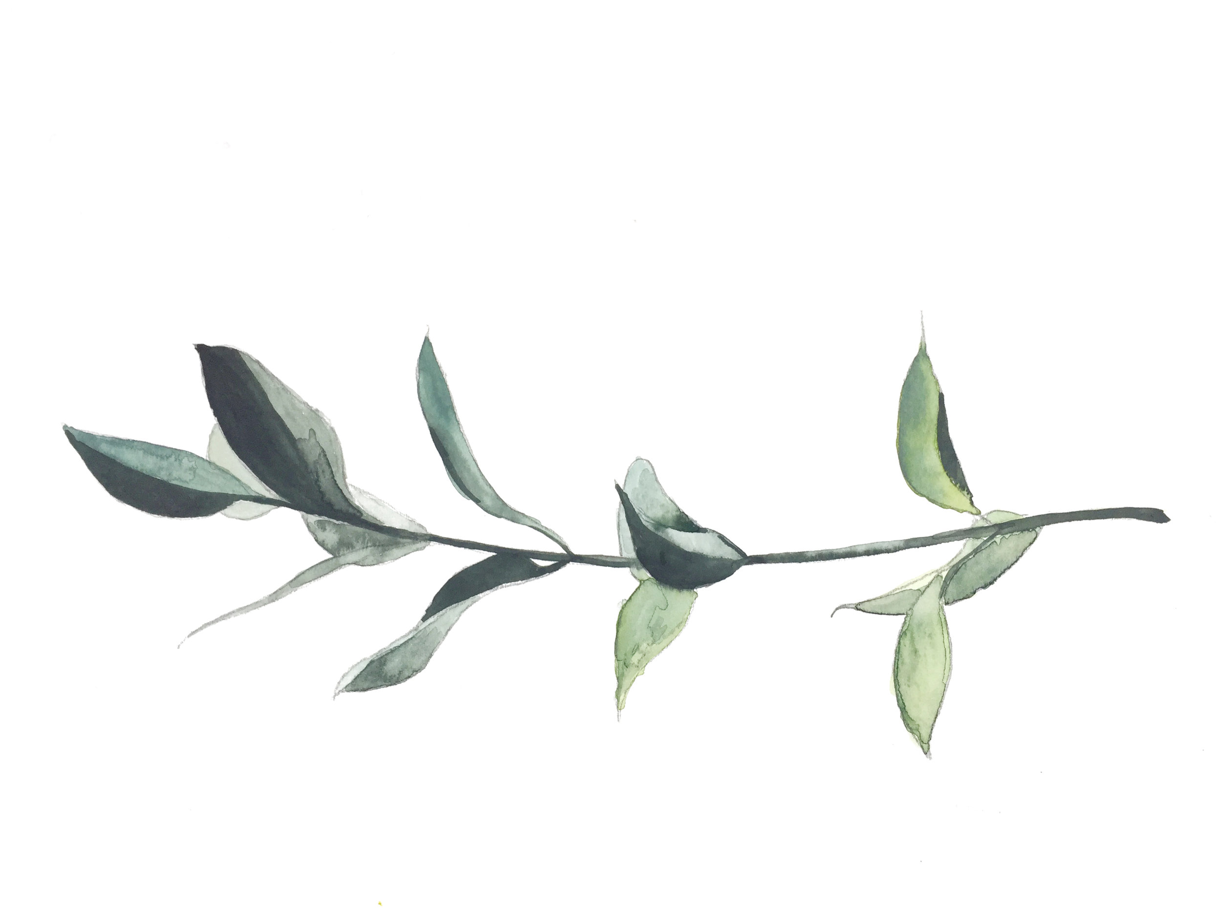 Plant Illustration Water Color.png