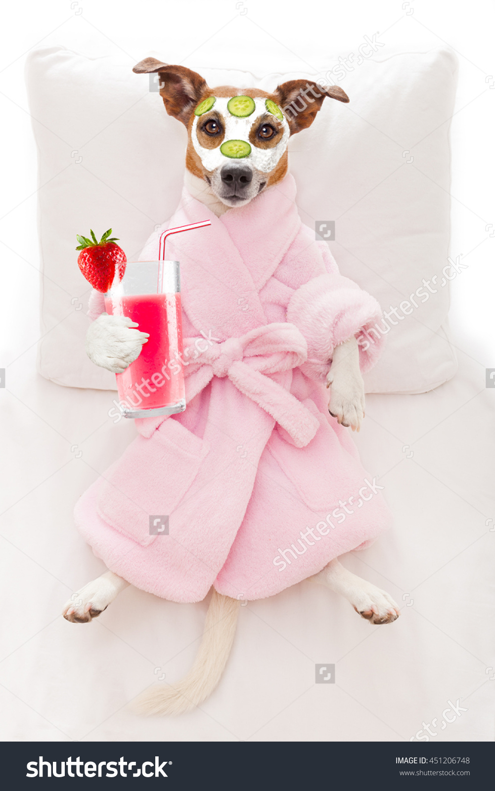 stock-photo-jack-russell-dog-relaxing-and-lying-in-spa-wellness-center-getting-a-facial-treatment-with-451206748.jpg