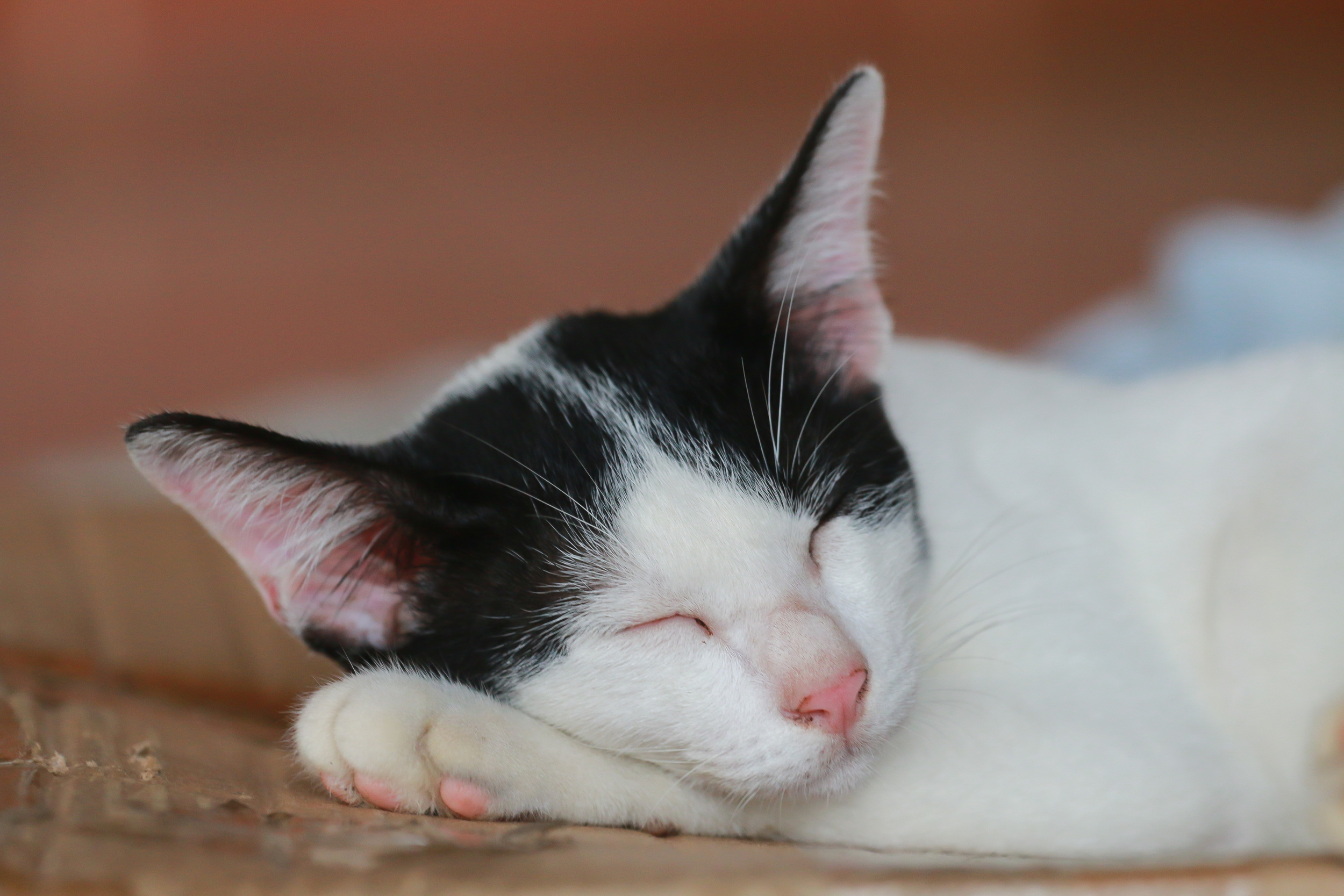 stock-photo-cat-sleeping-peaceful-456060058.jpg