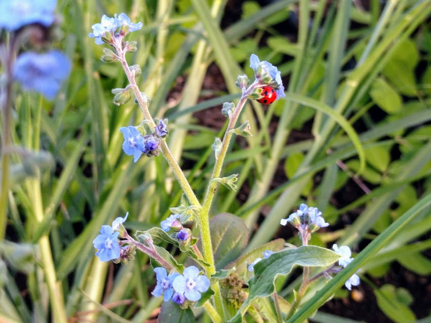 ladybug flower.jpg