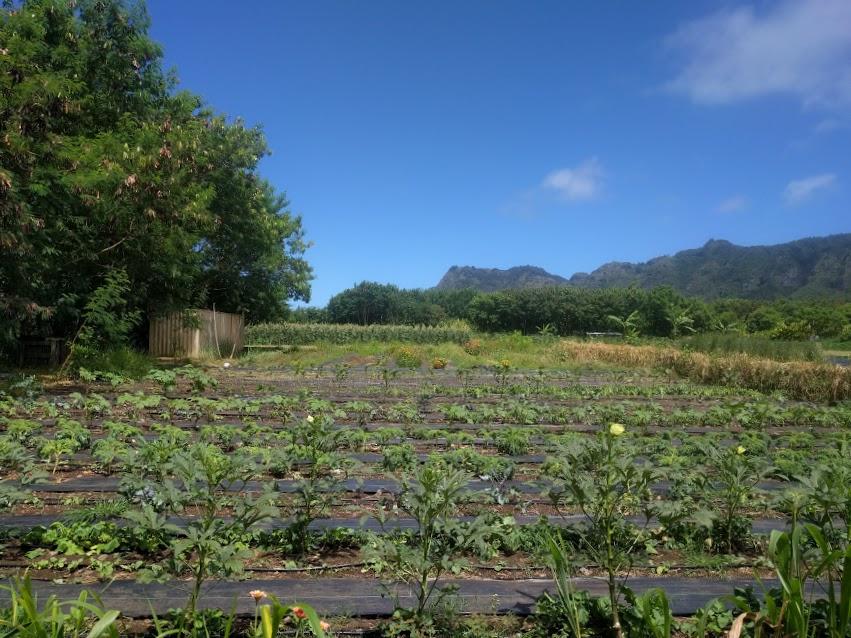 june farm.jpg
