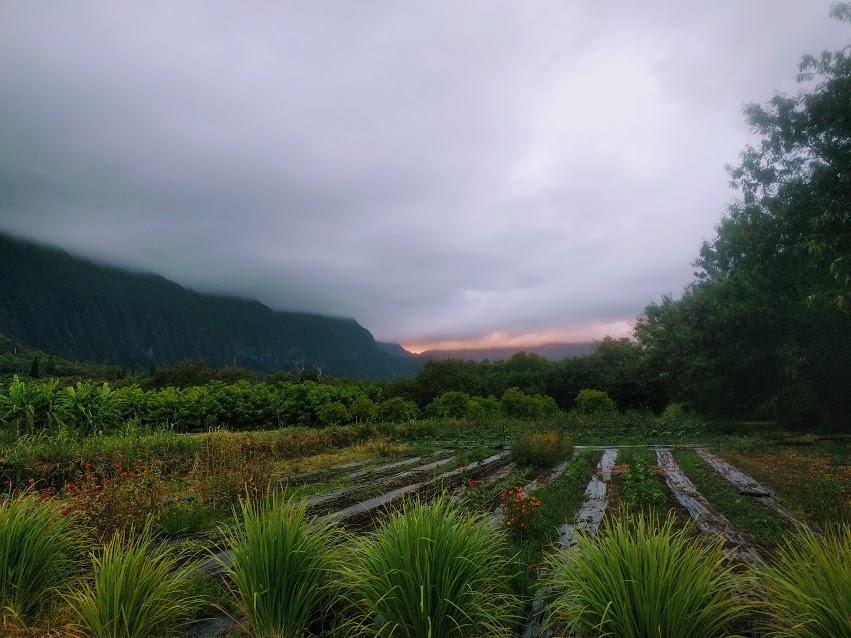 end of july farm.jpg