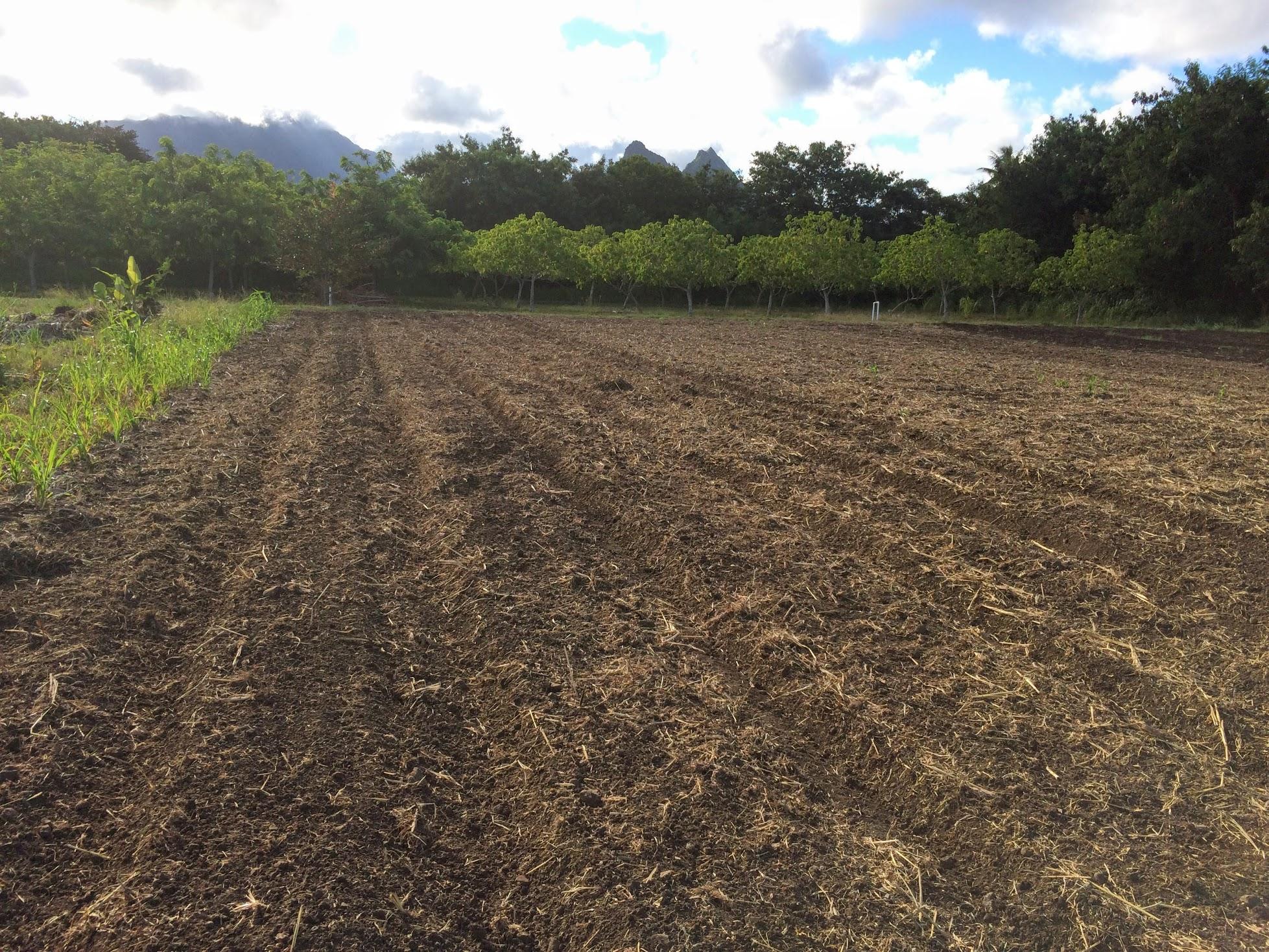 next field.jpg