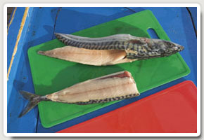 5. A finished flapper (top). Altenative baits are made by cutting a fillet or removing the head and gut