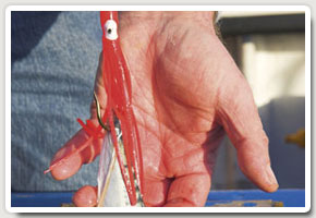 7. A squid-like plastic muppet, which flutters in the   tide, can be threaded above the hook to make a   traditional bait far more attractive to a hungry fish,   particularly ling