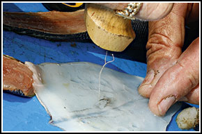 2. Cut and bash Clean the squid, then bash with a knife handle.