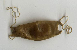 Dogfish-eggcase.jpg