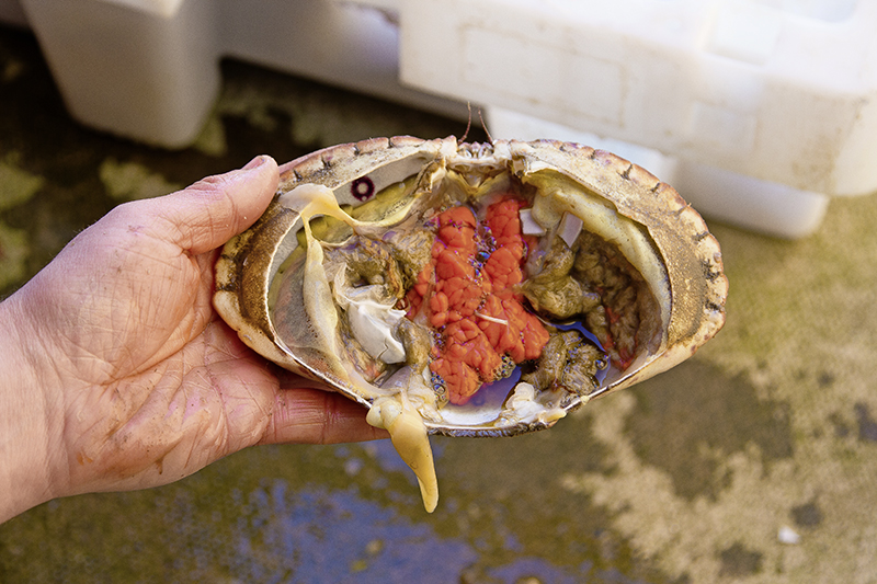 Pull away the carapace to reveal the flesh and coral inside the crab.