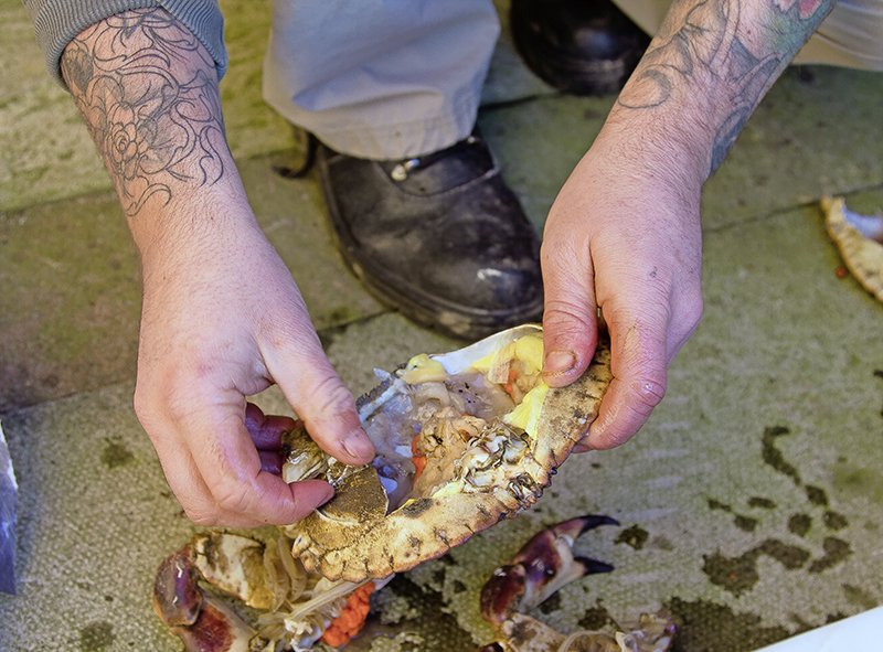 Turn the edible crab upside down so the eyes face the floor and, using the palm of your hand, hit the crown to despatch it in a quick manner.