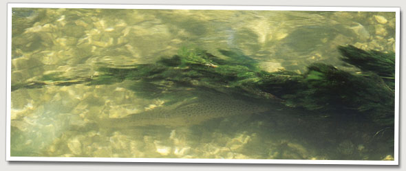 spottingfish.jpg