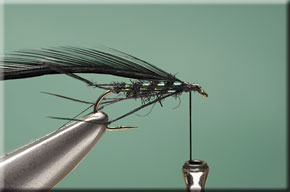 black_hopper-6-1.jpg