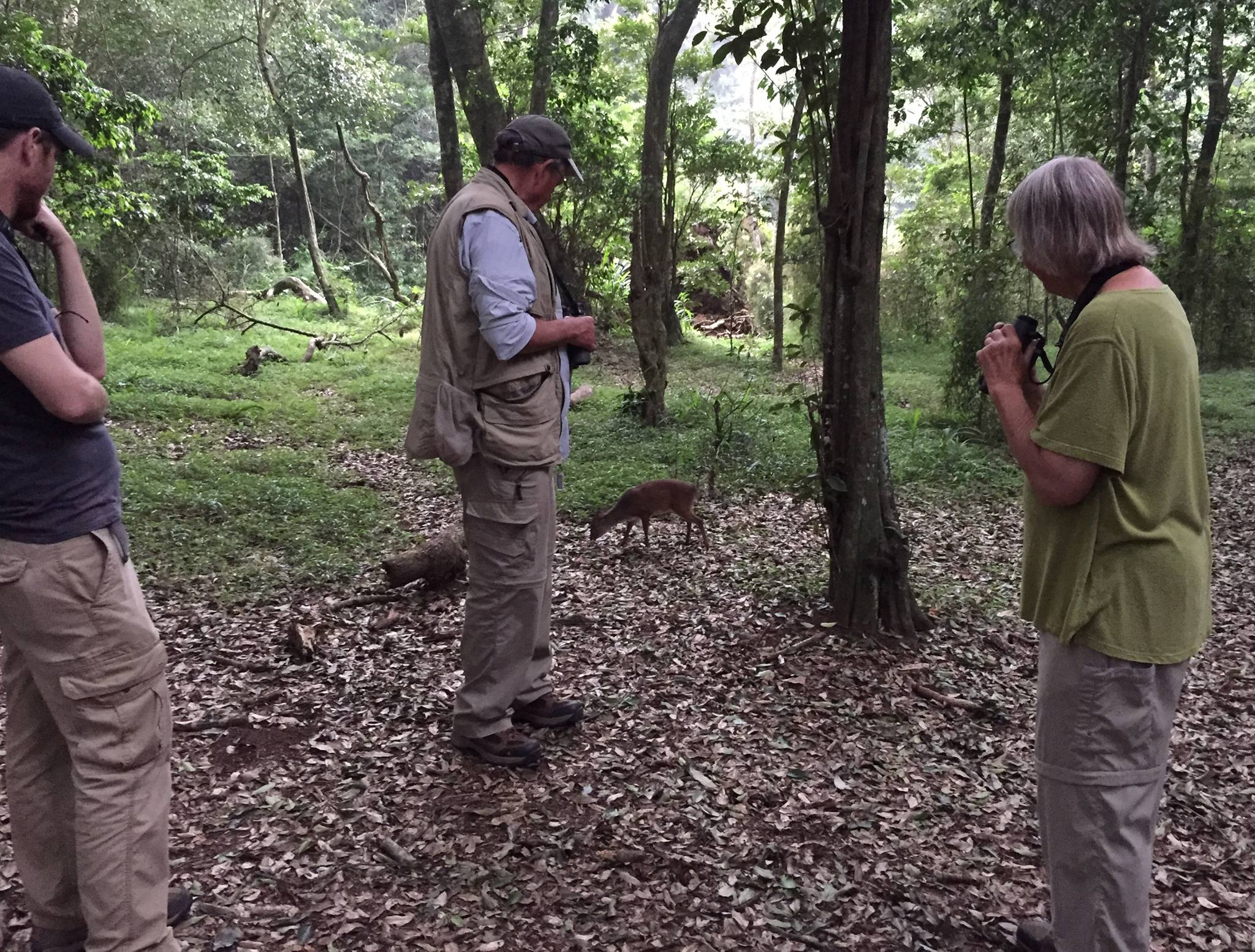 Sharing a moment with a Blue Duiker