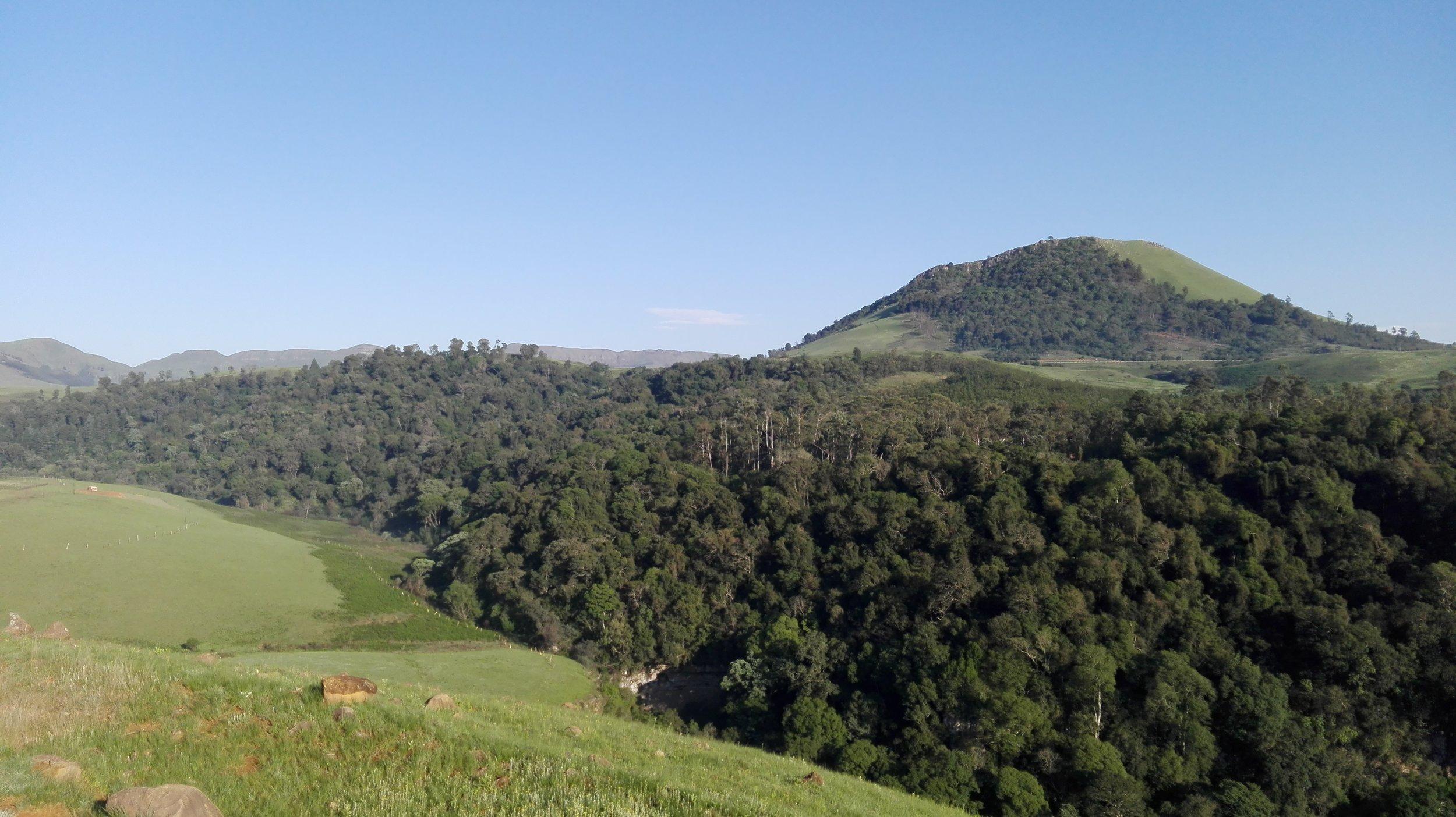 Mist-belt Forest