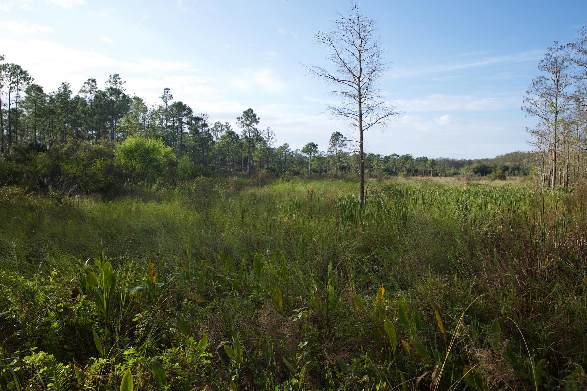 Corkscrew Swamp Habitat