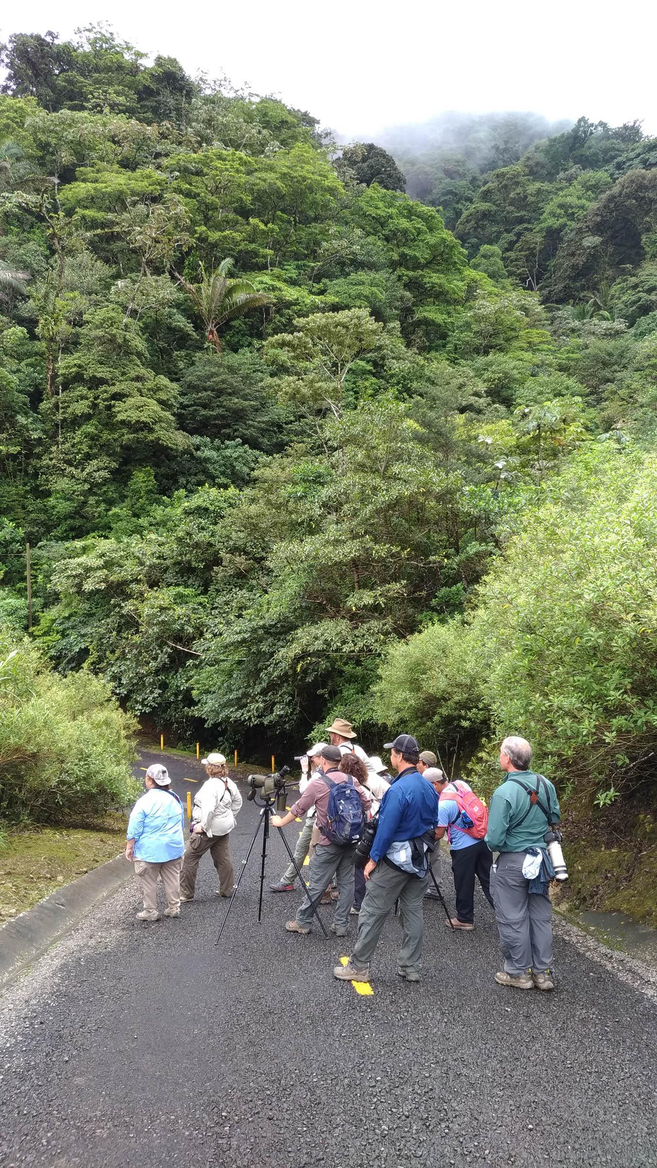 Birding near El Valle de Antón
