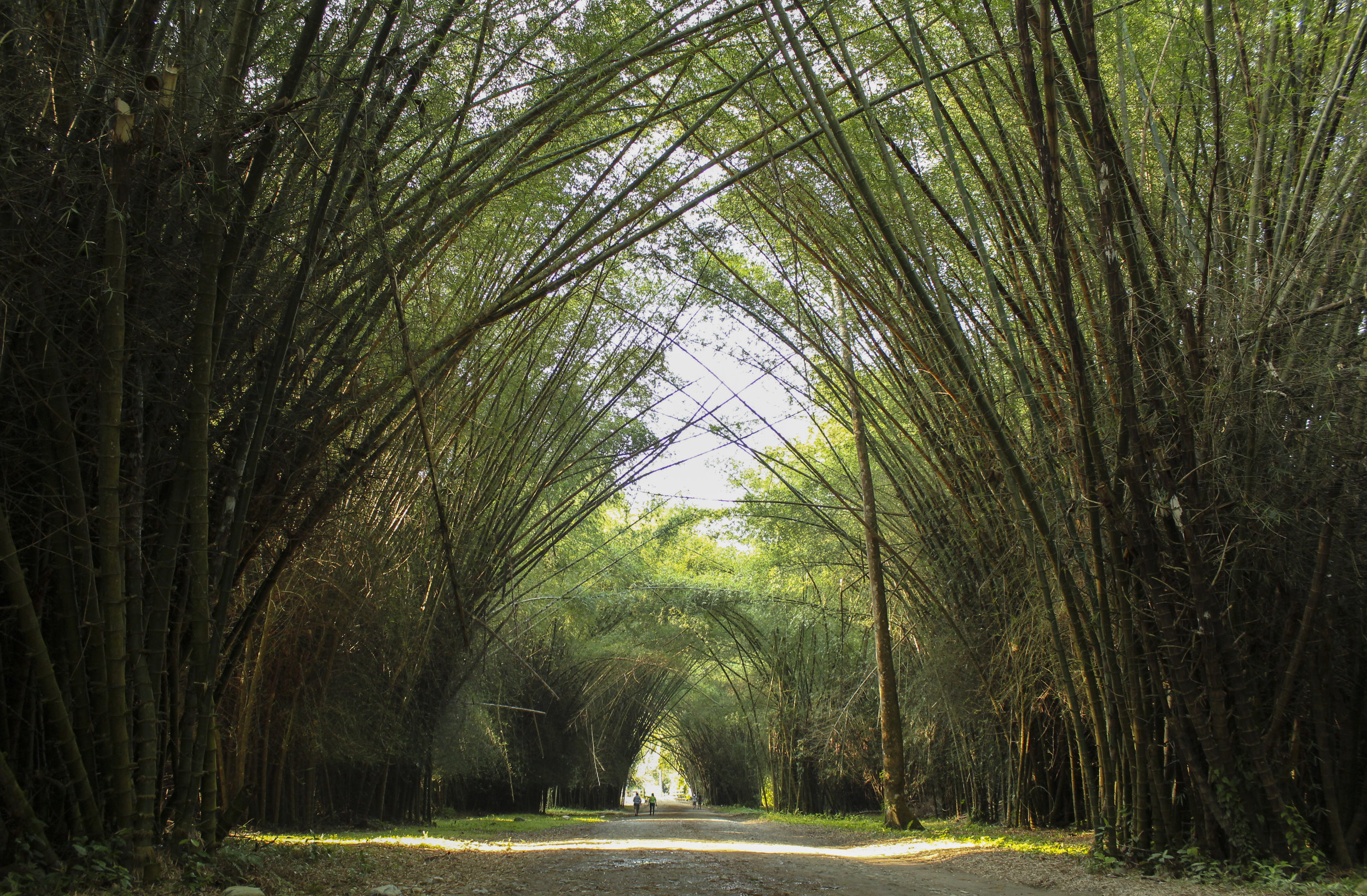 Bamboo-lined track
