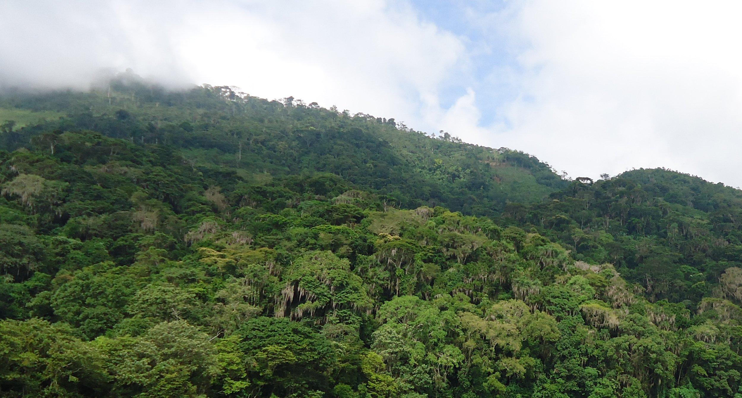 Honduran hill forest