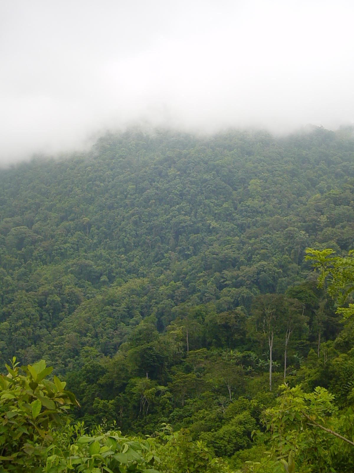 Honduran cloud forest